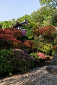 Temple et Azalées #Japon photo Yasuo Itabashi #jardin