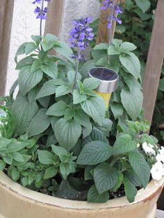 Clean & Scentsible: Summer Patio Solar light in potted plant.