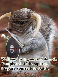 Squirrel in helmet with sword and shield: Well now you gone and done it. You pissed off the squirrel. Prepare yourself for battle. Ninja Squirrel, Squirrel Memes, Squirrel Girl, Cute Squirrel, Squirrels, Secret Squirrel, Flying Squirrel, Funny Animal Memes, Funny Animal Pictures