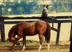 Secretariat and the Bid. Two Kentucky Derby horse at the farm