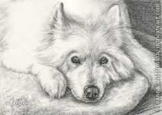 Amazing drawing of a dog.