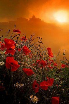 Красивый закат солнца. Провинция Франции.