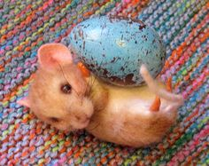 Needle Felted Art by Robin Joy Andreae: The Promise of Spring