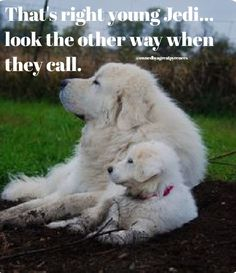 Great Pyrenees dog and puppy. Cute Dogs And Puppies, Big Dogs, I Love Dogs, Doggies, Pyrenees Puppies, Great Pyrenees Dog, Animals And Pets, Cute Animals, Terra Nova