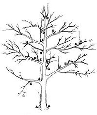 When pruning just about anything, including apple trees, here is a list of situations you always want to prune out.     A. Suckers     B. Stubs or broken branches    C. Downward-growing branches     D. Rubbing or criss-crossing branches     E. Upward growing interior branches     F. Competing leaders     G. Narrow crotches     H. Whorls