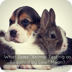 "What does animal testing required by law mean? Learn more about when brands use the phrase ""as required by law"" and what it means about their stance on animal testing. Logical Harmony, Stop Animal Testing, How To Become Vegan, Puppy Mills, Cruelty Free Makeup, Vegan Beauty, Animal Cruelty, Set You Free, Animal Welfare"