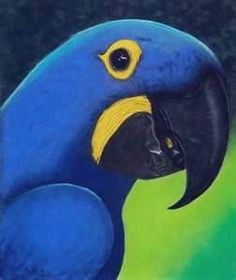 hyacinth blue macaw - Bing Images