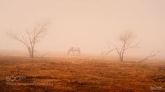 Alone by MORKES. Please Like http://fb.me/go4photos and Follow @go4fotos Thank You. :-)