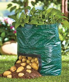 Garden Vegetables Grow Bag Potato Planter Bags Gardeners& Grow Bags with Flap Have a mini garden anywhere at home, even when space is limited! Compact and lightweight planting bags allow you to grow a garden any place.on the patio, dec Yuhwa Green Potato Hydroponic Gardening, Hydroponics, Organic Gardening, Container Gardening, Gardening Tips, Aquaponics Kit, Kitchen Gardening, Gardening Services, Gardening Quotes