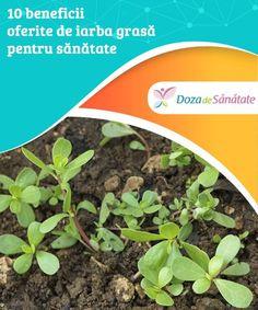 10 beneficii oferite de iarba grasă pentru sănătate.  Datorită conținutului său nutrițional, iarba grasă este considerată un superaliment. Află din articolul de față care sunt beneficiile acestei plante medicinale pentru sănătate. Health Benefits, Cleaning, Cooking, Fat, Kitchen, Cuisine