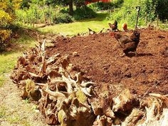 Hugelkultur: The ultimate raised garden bed