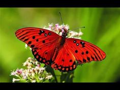 Butterfly - My animal friends - Animals Documentary -Kids educational Videos - YouTube - 13 min.