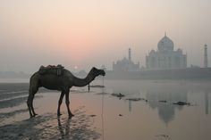 Behind the Taj Mahal at dawn, waiting for the sun to rise behind the camel for this shot