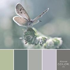 Today I've found us a blend of sage, grey, palest lilac, dark green and dark mocha. Colour Schemes, Color Combos, Color Patterns, Room Colors, House Colors, Paint Colors, Green Colour Palette, Color Palate, Sage Color