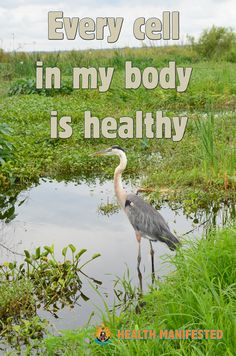 Every cell in my body is healthy - Health Manifested  #healthmanifested #everycellhealthy #healthier  #healthyhappylife #wellnessjourney #nourishyourself #fitforme #justbreathe #lookwithin #inspirationdaily  #Mindset #Success #Inspire #ThinkBig #Believe #Motivate #instamotivation #life #LOA #lawofattraction #power #motivation #inspiration #quotes #dreams #morningmotivation #hope #havemotivation #onlymotivation #IAm #raiseyourvibrations #mindbodyspirit #mindbodysoul