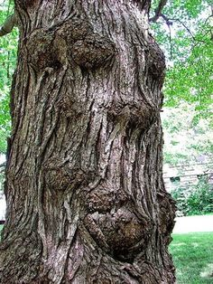 Maybe this tree started life as... someone? LOL