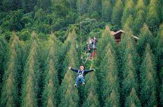 Na Mega Tirolesa, o praticante desliza por 450m, a quase 50km/h, sobre um vale forrado de eucaliptos, Monte Verde, Minas Gerais