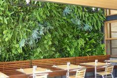 Fern Wall for Urban Bistro. Burlingame, California.   Plants On Walls