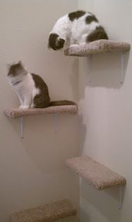Easy DIY cat shelves. Much cheaper than a cat tree! Our cats love them!....this is the simplest and cheapest diy cat tree, depending on how much scrap wood you have laying around.  Check carpet stores for miscellaneous, too small remnants to carpet your boards.  Habitat for Humanity ReStore for brackets.
