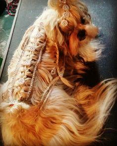 Penteados creativos dog grooming