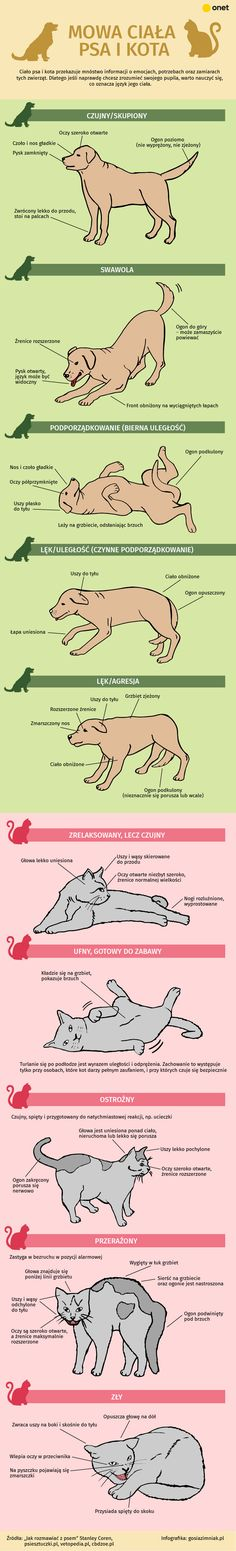 Mowa ciała psa i kota Animals And Pets, Baby Animals, Cute Animals, Everything And Nothing, Wtf Funny, Life Hacks, Infographic, Dog Cat, Advice