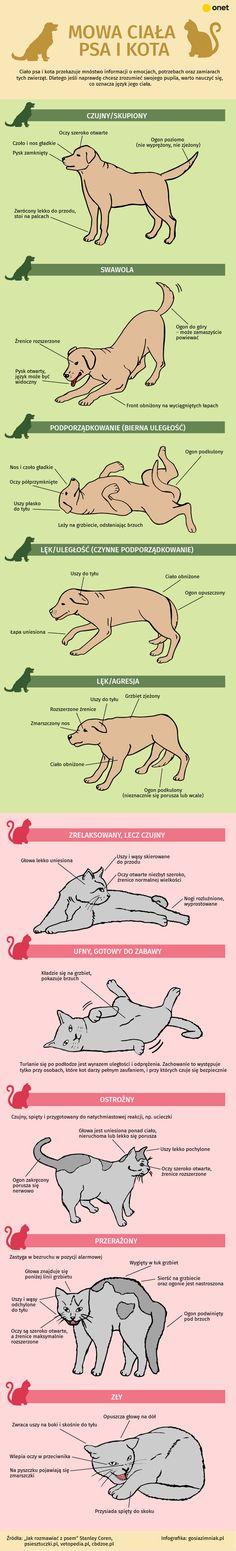 #infografika #pies #kot