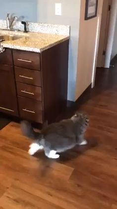 for Effort 😸🥉 - Animals/Tiere Funny Cute Cats, Cute Cats And Kittens, Cute Funny Animals, Funny Kittens, Cute Animal Videos, Funny Animal Pictures, Dog Pictures, Chat Kawaii, Funny Cat Videos