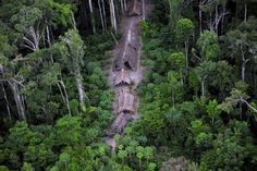 Members of an uncontacted Amazon Basin tribe and their dwellings are seen during a flight over the Brazilian state of Acre along the border with Peru, May, 2008. REUTERS/Funai-Frente de Protecao Etno-Ambiental Envira