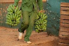 Bombastic Banana Facts That You Did Not Know