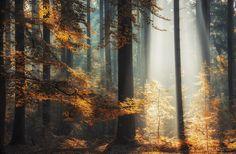 luminous Forest by bob van den berg on 500px