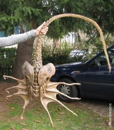 Super-Facehugger Folks, if you find these on your property, PLEASE call animal-control immediately. Aliens Funny, Aliens Movie, Aliens And Ufos, Predator Movie, Predator Alien, Arte Alien, Alien Art, Xenomorph, Alien Film
