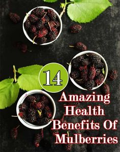 14 Amazing Health Benefits Of Mulberries: Mulberries are a good source of resveratrol, a potent phytonutrient that researchers believe to prevent cancer.