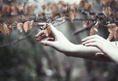 Autumn ~ Whispers