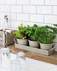 Plantas en cocinas Herb Garden In Kitchen, Kitchen Herbs, Home And Garden, Herbs Garden, Hydrangea Care, Grow Room, Herb Pots, Herbs Indoors, Grow Your Own Food