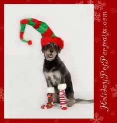 Dog wearing Christmas Hat and socks