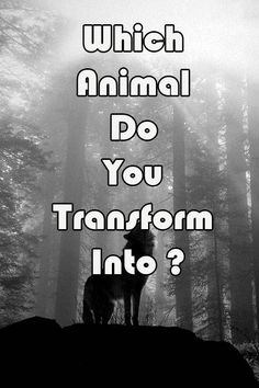 Which Animal Do You Transform Into?