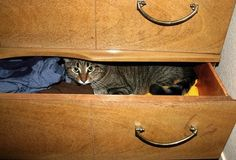 Things Cats Do When You Leave The House