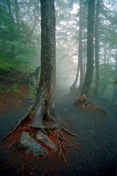 Below the Treeline, in the Fog, at Mt Fuji by friday1970, via Flickr