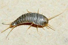 Böceklerden kurtulmanın doğal yolları... | Yaşam Haberleri