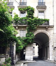 Wisteria-covered historical architecture in Paris.