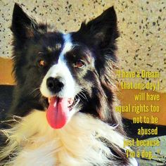 """""""For Martin Luther King's Day"""" Asha has a dream too that one day she will be protected by the law against those who would abuse her just because they can as to them she is only a dog. As we know Dreams do come true...New in the life of Asha...!"""