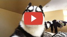Share this video