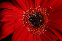 pictures of flowers in red - Google Search
