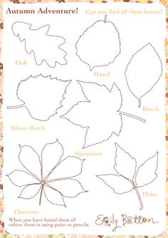 Autumn leaves activity sheet #EmilyButton #Autumn #ActivitySheet