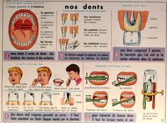 Nos dents (affiche scolaire) Teaching Science, English Vocabulary, Dentistry, Learning, Kids, Blog, Poster, French, Vintage