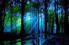 """Wenn Sonnenstrahlen Tanzen"" by Christian Broens (Germany), Sony World Photography Awards 2008 World Photography, Photography Awards, Light Photography, Beautiful World, Beautiful Places, Beautiful Forest, Beautiful Scenery, Simply Beautiful, Favim"