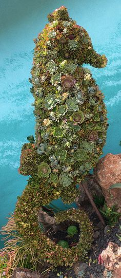 succulent seahorse topiary -part of the Underwater Garden at the Quail Gardens in San Diego.