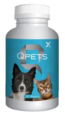 Today are you Happy? Do you have Best Friends? Chance is my Best Friend, If you answer yes to both Questions you must share. http://keithdavisshow.myqxlife.com/products/index.html