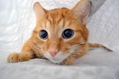 Sneaky kitty!