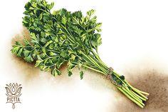 Vegetable watercolor set for LUX Publica on Behance